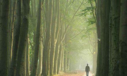 İlim, İrfan ve Hikmet Yolculuğu