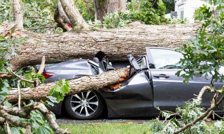 Almanya'da Fırtına Kopuyor: Seferler İptal Edildi, Ağaçlar Devrildi!